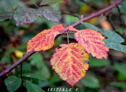 automne_malade_2