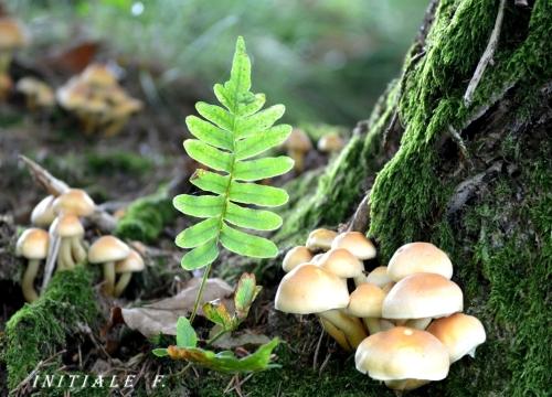 automne_malade_3
