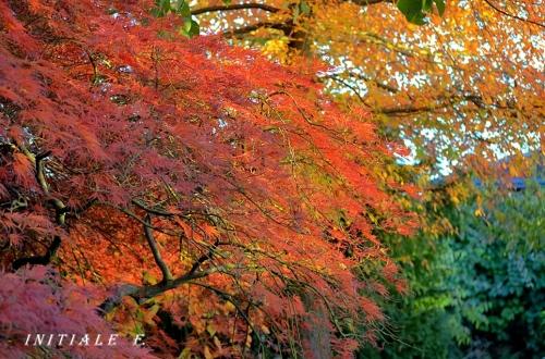 automne_malade_f