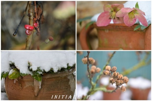 jardin_2013_f