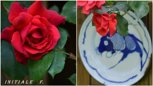 rose_rouge (2)
