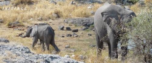 elephanteau