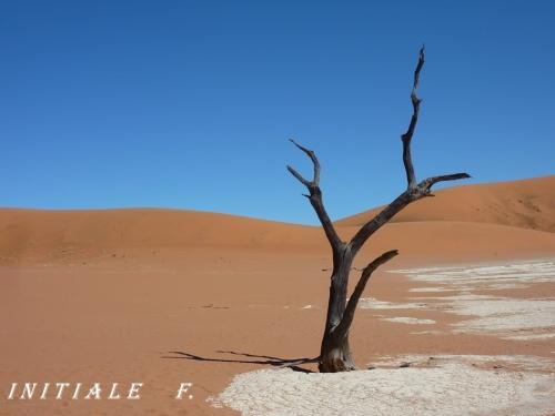 dunes_rouges (4)