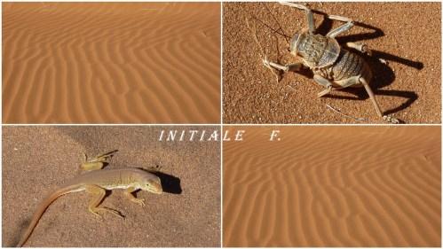 dunes_rouges (9)