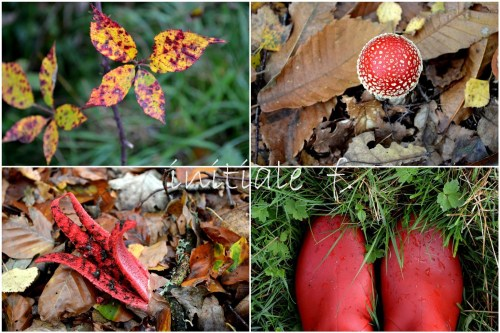 rouge_automne_f1