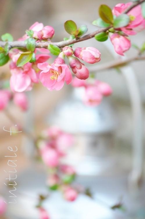 avril_2014 (3)f