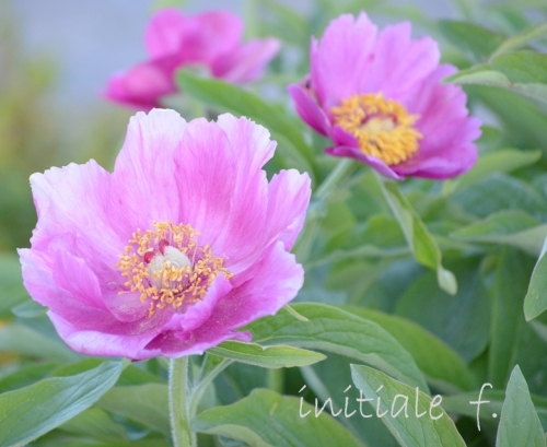 spring(1)