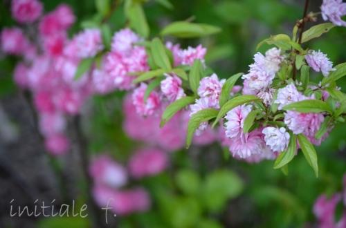 spring(2)