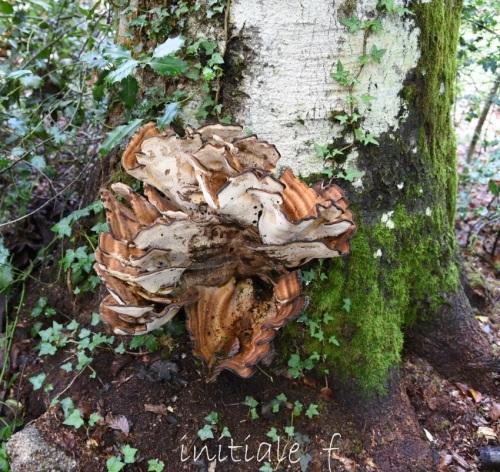 champignons (2)