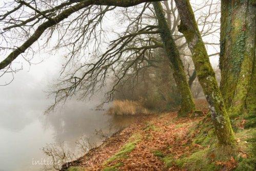 brouillard-2